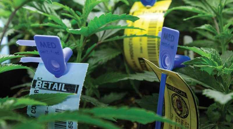 metrc_cannabis_compliance_regulations_marijuana_law